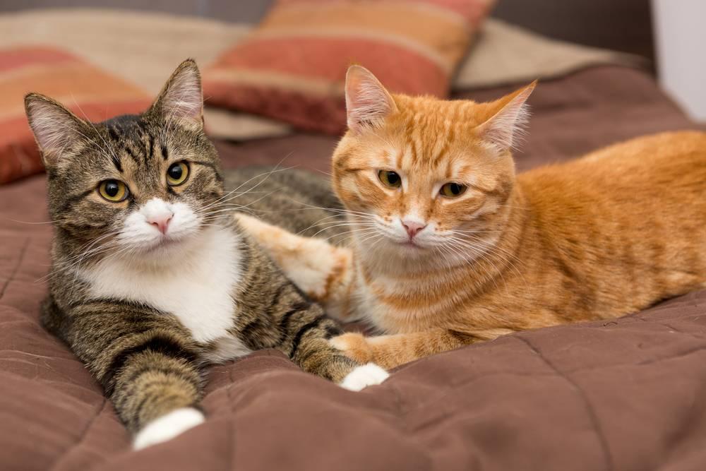 where to buy precious cat ultra premium clumping cat litter