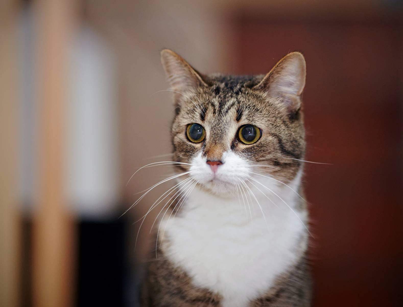 Кастрация кота: показания, особенности операции, уход за питомцем