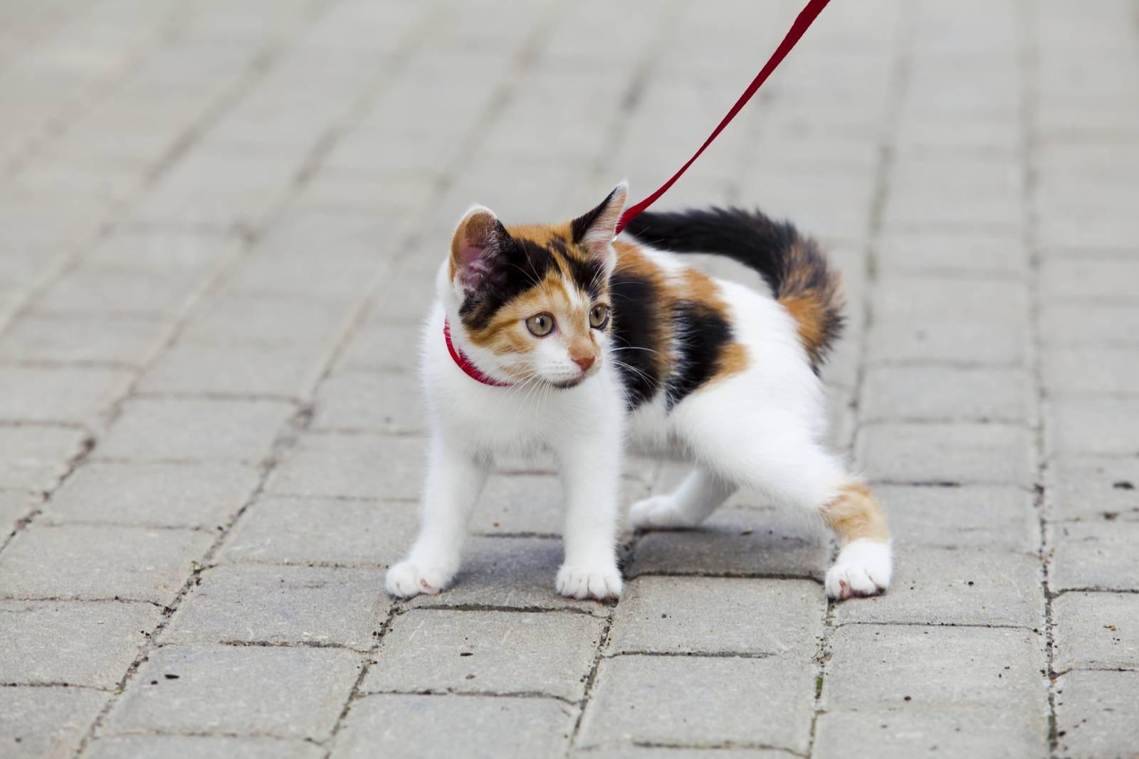 чипирование кошек цена