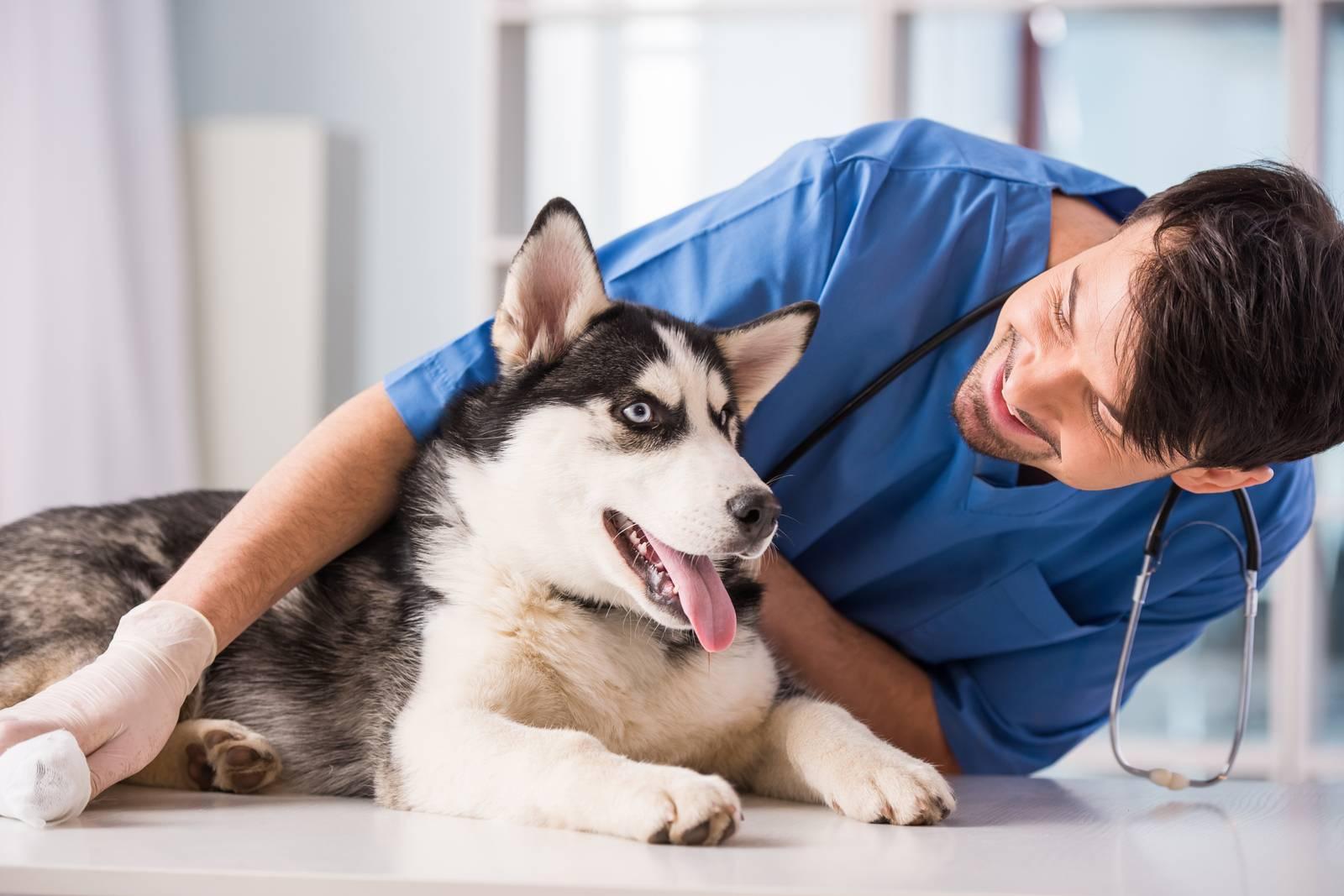 найти ветеринарную клинику