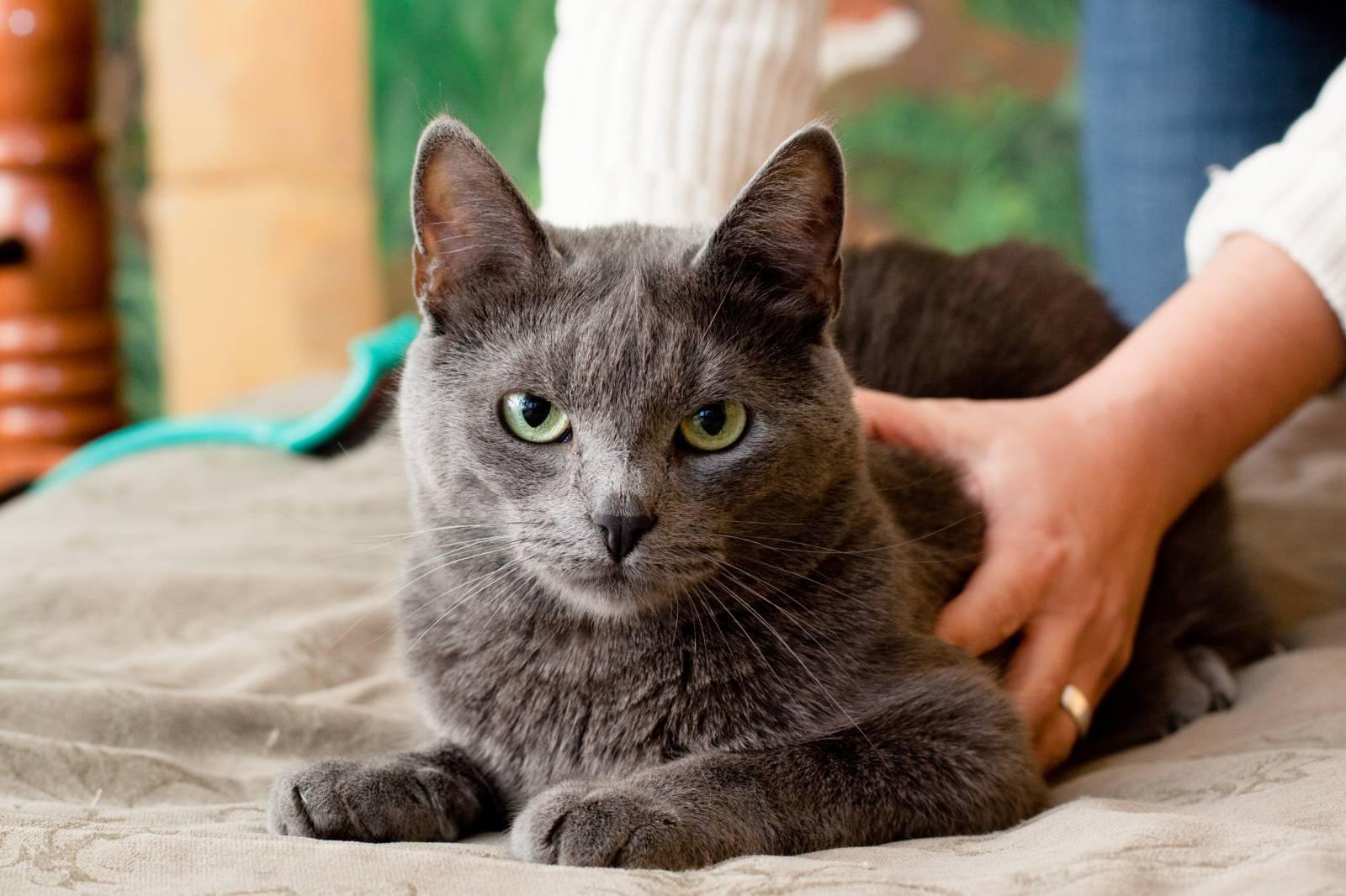 чипирование кошек клиника