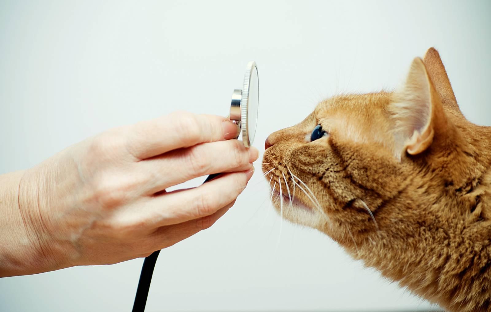 цены на ветеринарные услуги