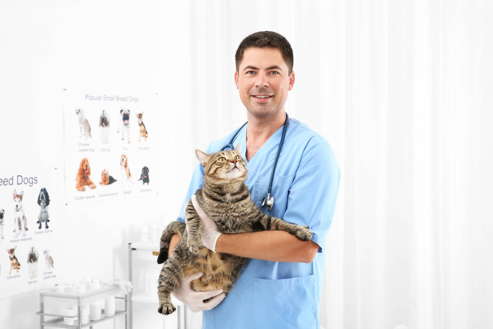 оказание ветеринарных услуг