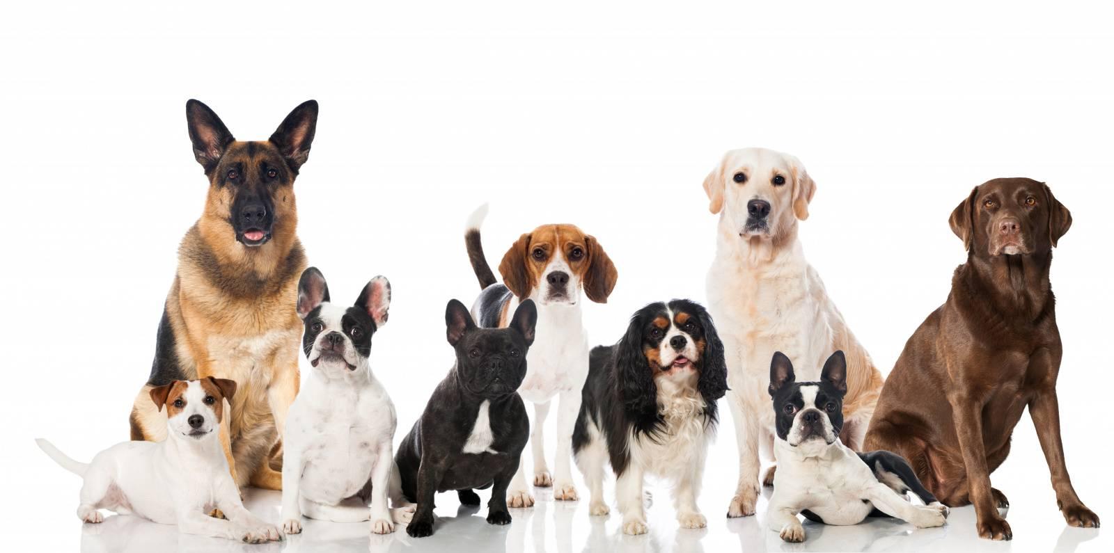 классификация собак по мкф