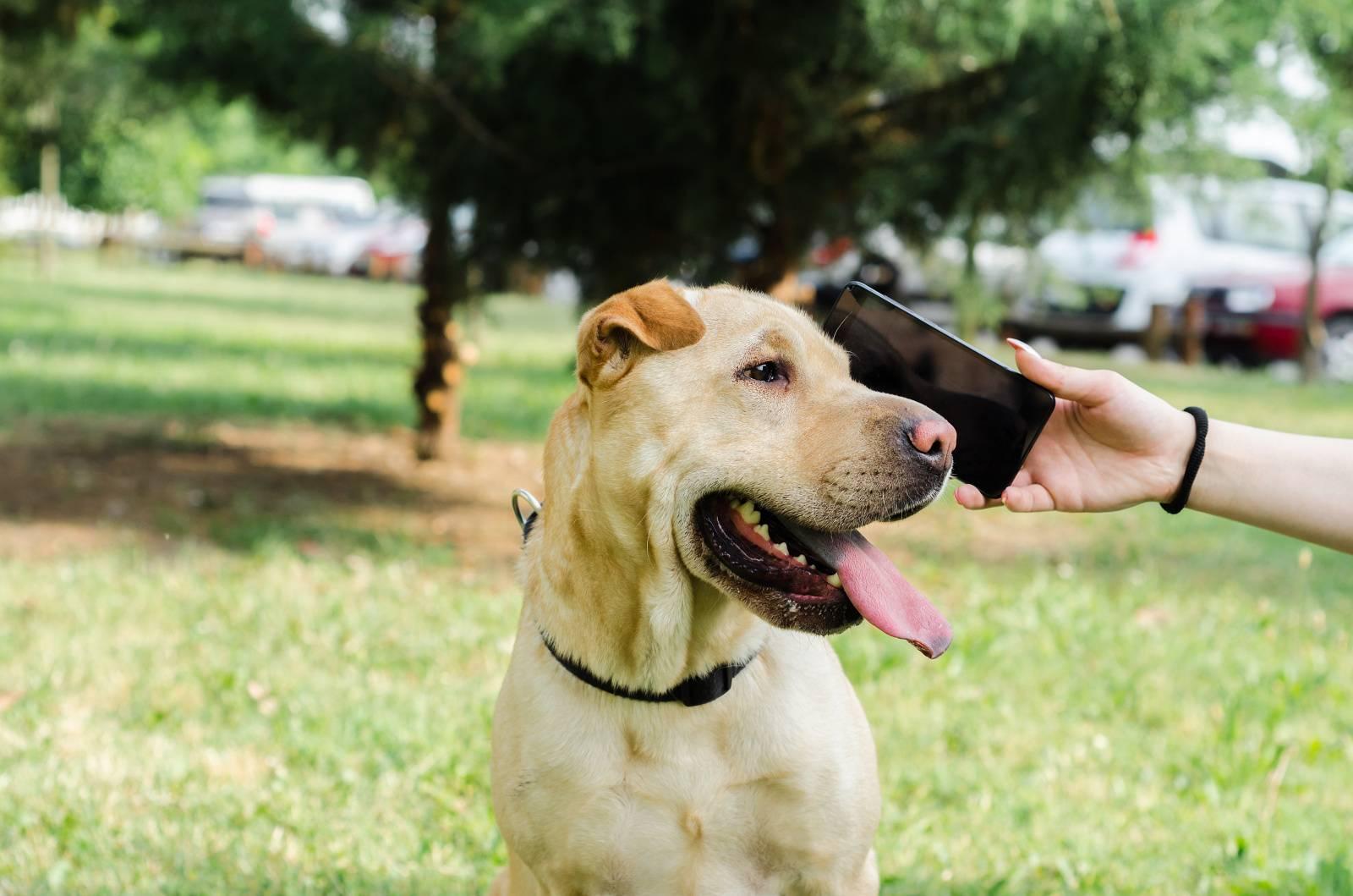 записать собаку к ветеринару