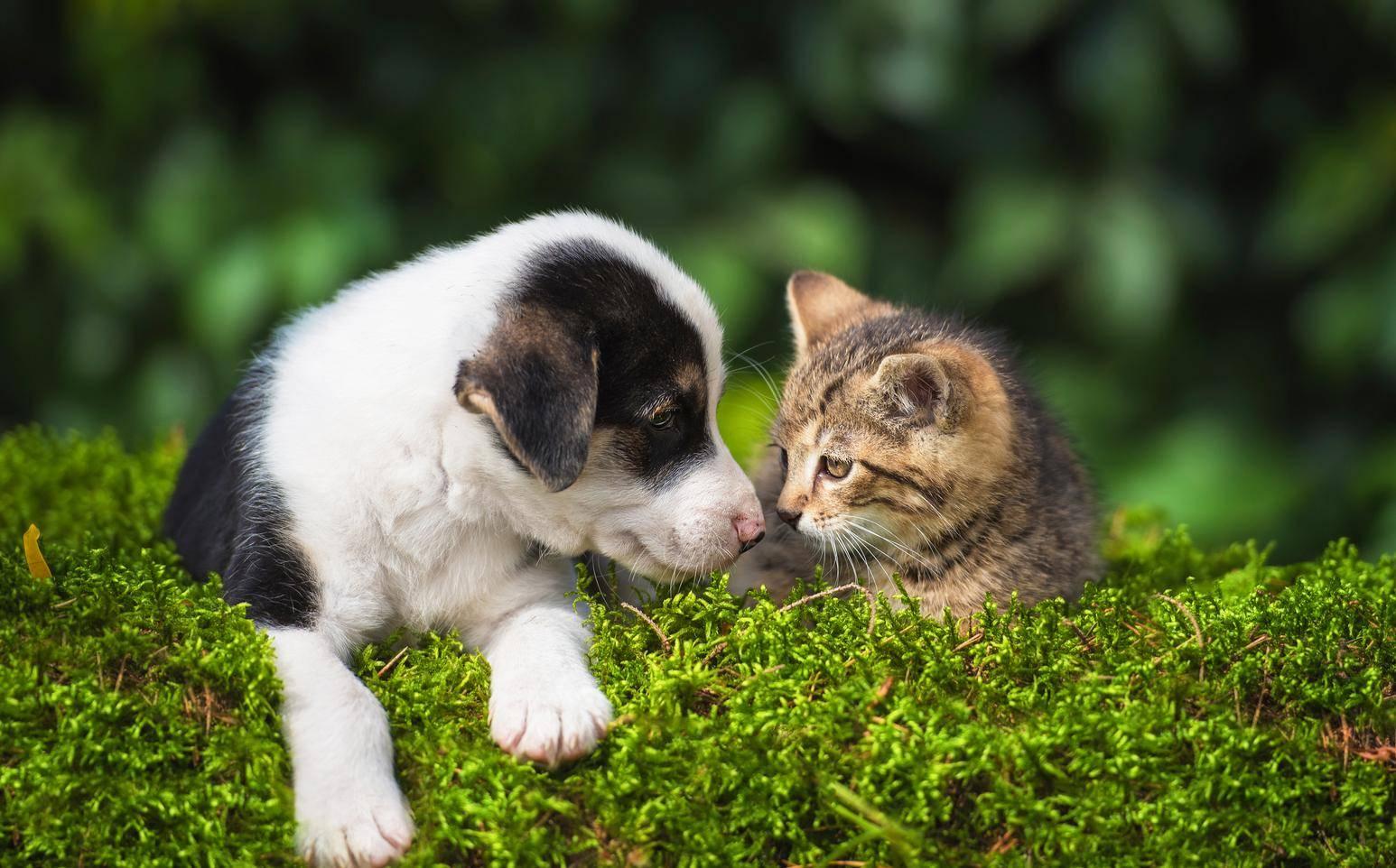 удаление клеща у собаки и кошки