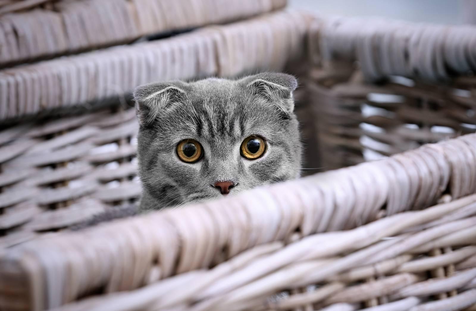 ветеринарная клиника кастрация котов