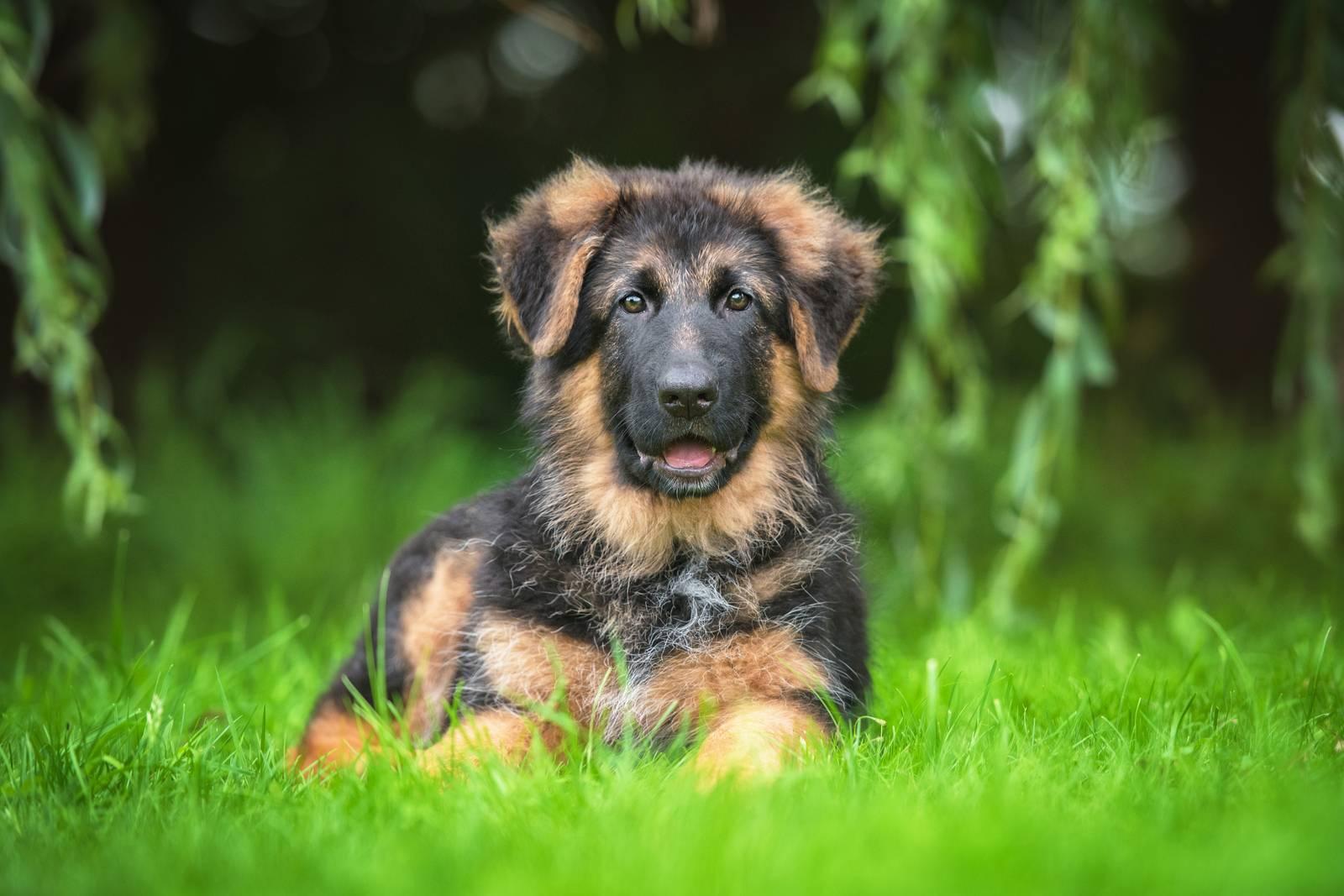 удаление клеща у собаки