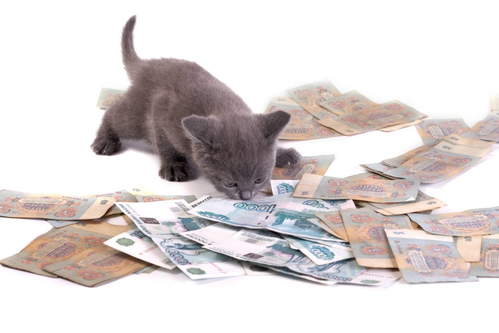 ветеринарная клиника цены на услуги