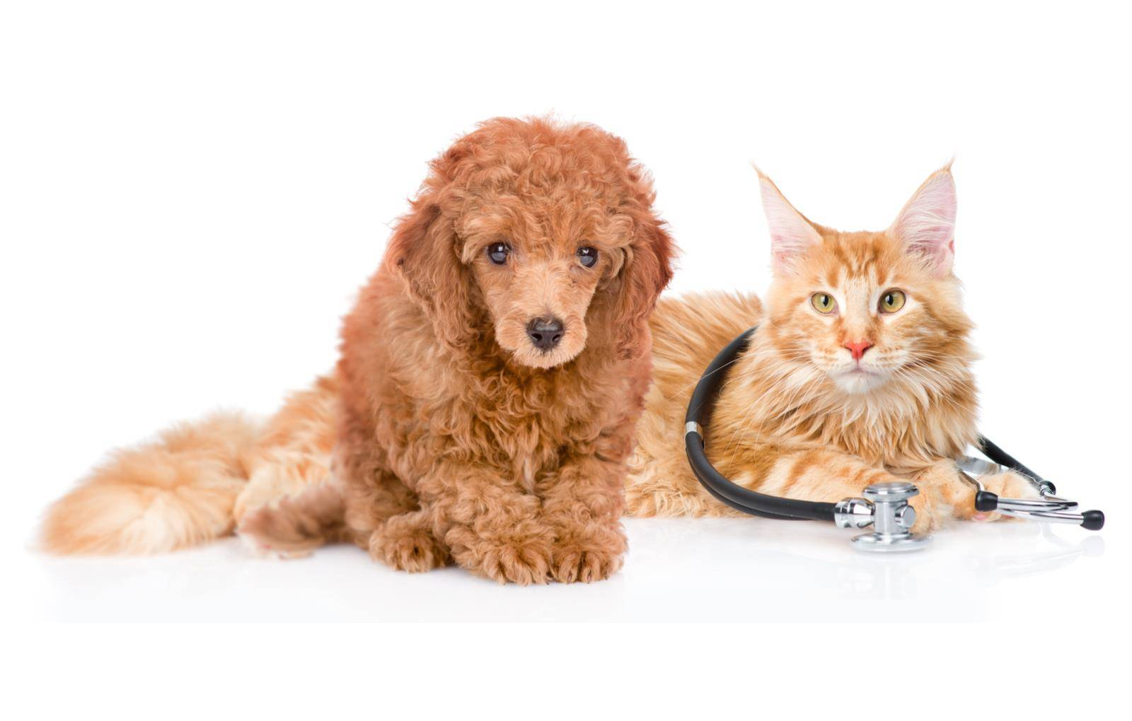 ветеринарная помощь кошкам и собакам