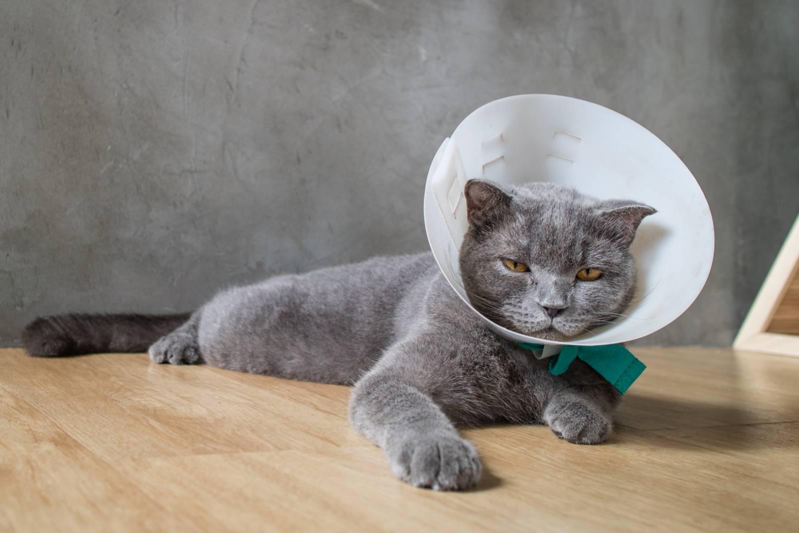чипирование кошек москва