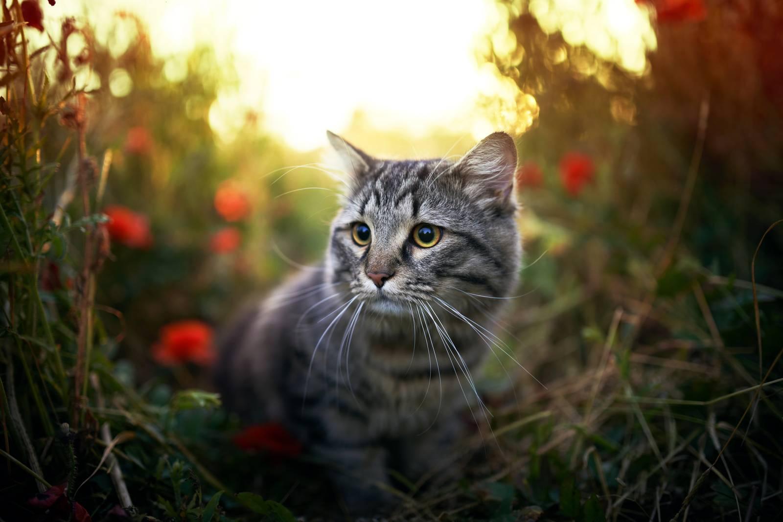 удаление клеща у кошки