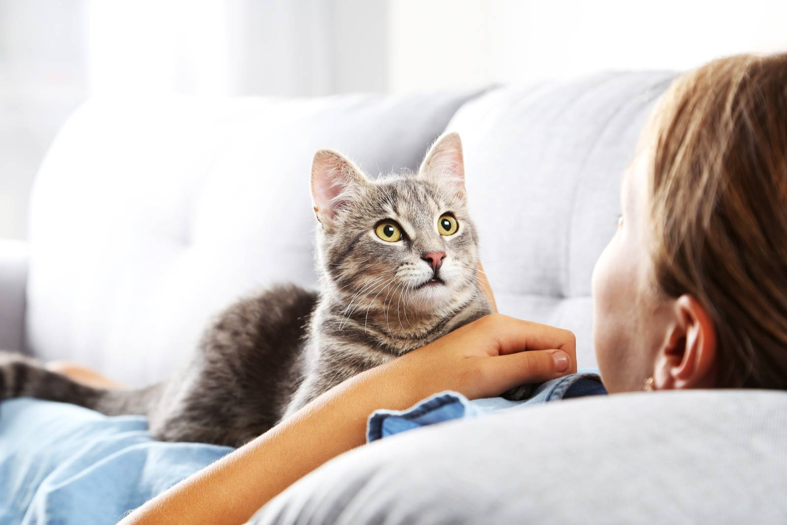 удаление яичников у кошки