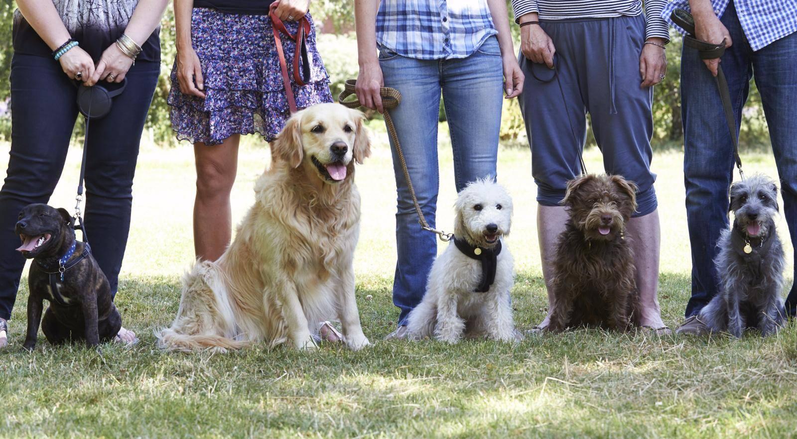 поиск ветеринарных клиник по параметрам