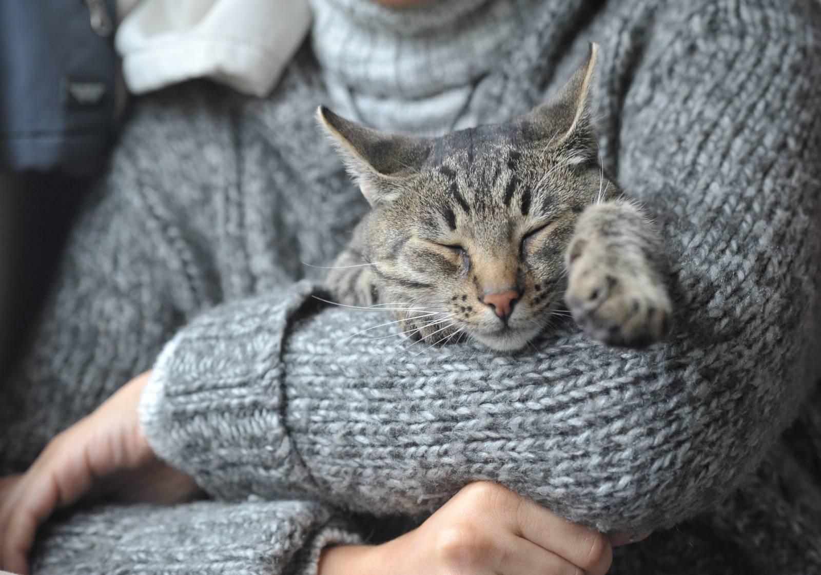 стерилизация и кастрация кошек цены