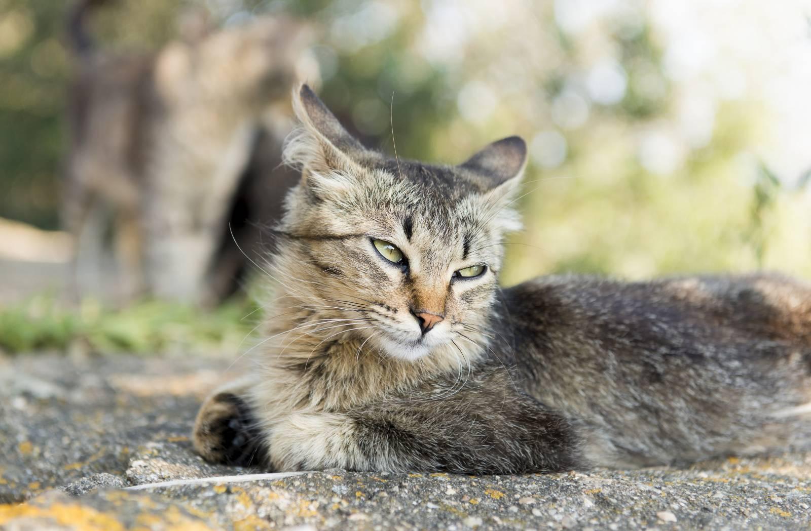 как бороться с ушным клещом у кошек