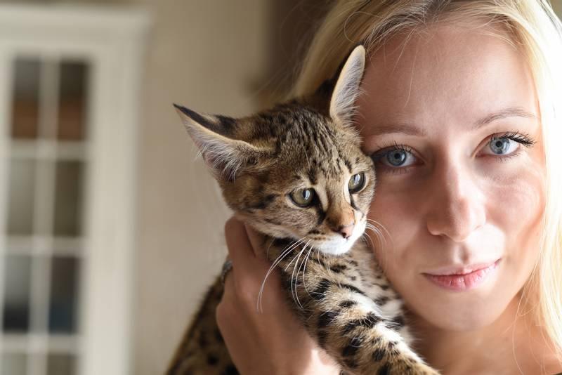кошка саванна описание породы