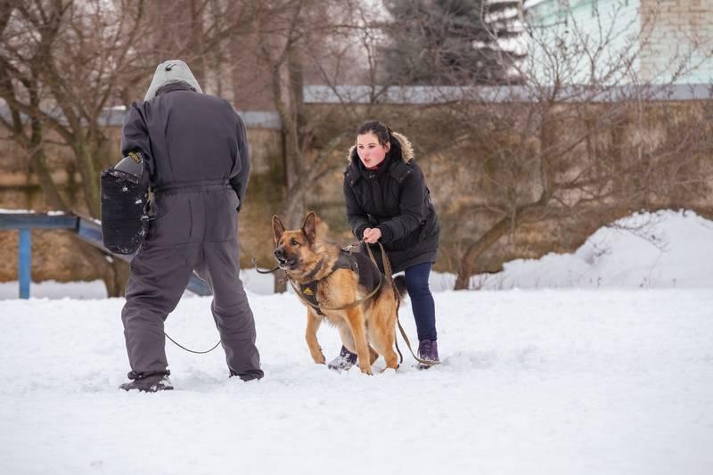 правила дрессировки сторожевых собак