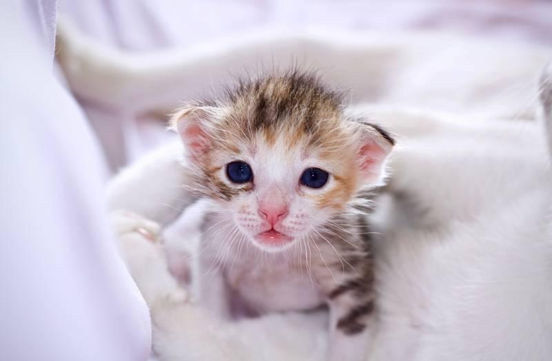 развитие котят по дням