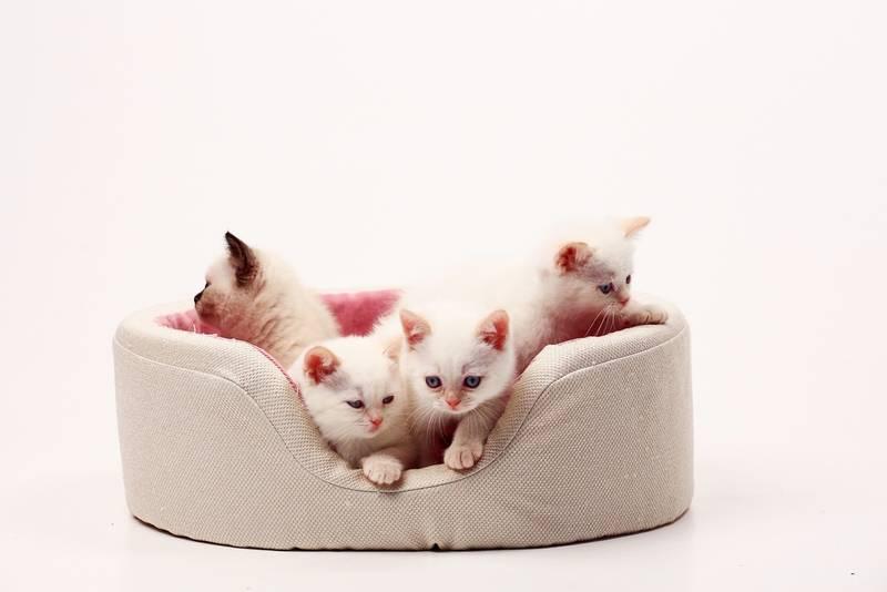 развитие котенка по месяцам