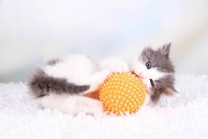 развитие котят после рождения