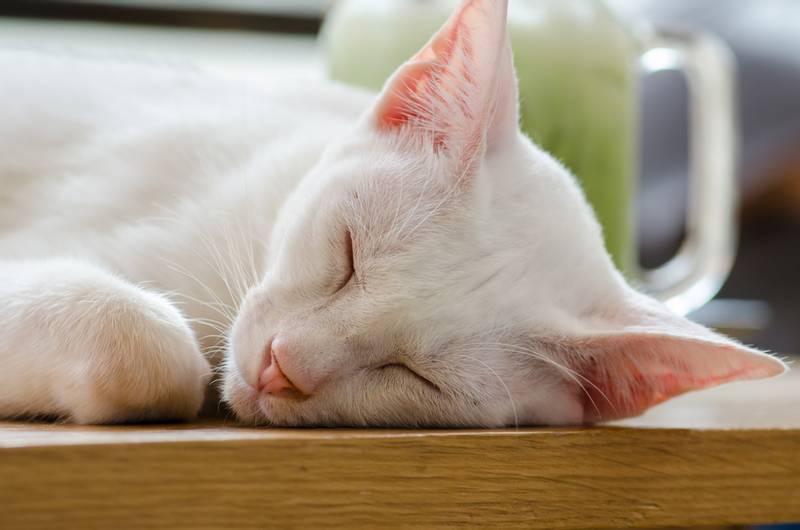 чистка ушей кошке цена