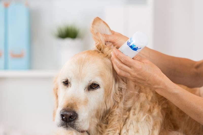 чистка ушей собаке цена