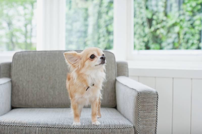 как правильно дрессировать маленьких собак