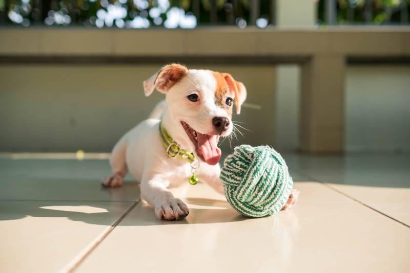 Картинки по запросу игры для собак картинки