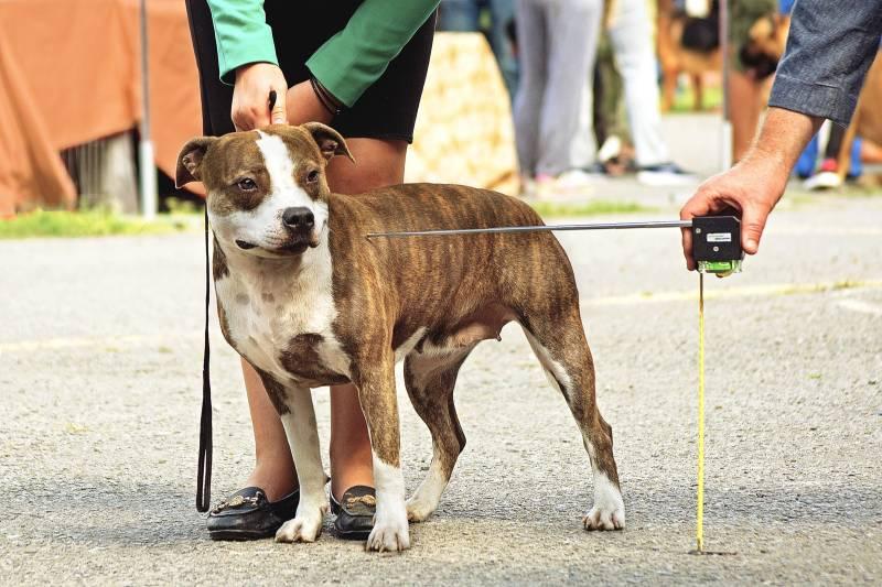 картинка измерения собаки используют для раздвигания