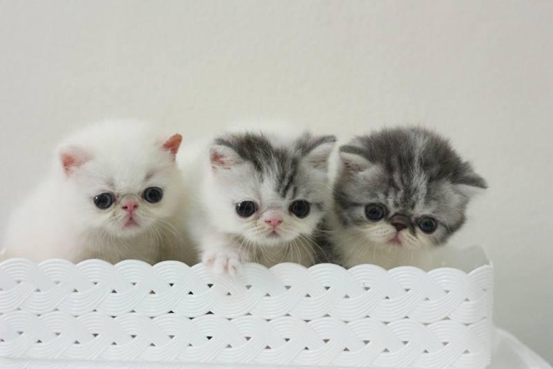 Обои для рабочего стола Котята Кошки Морда Взгляд животное | 533x800