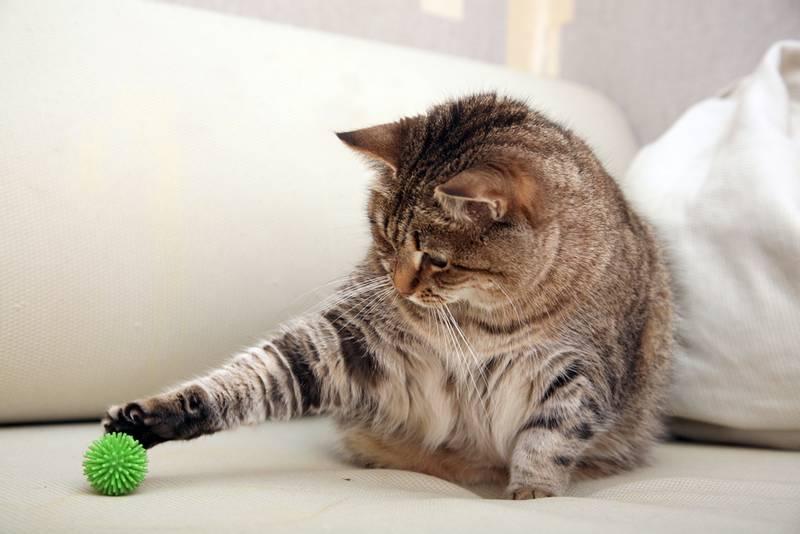 Happy cat behaviour