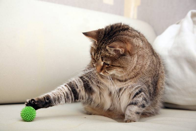 flea treatment injection for cats