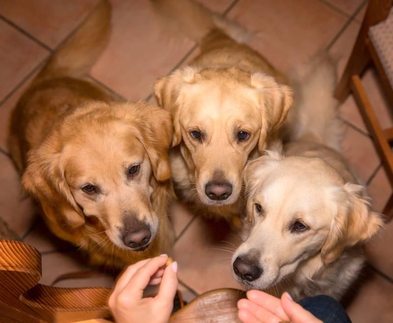 виды дрессировки служебных собак