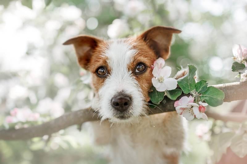 Поиск ветеринарных клиник онлайн на Petstory