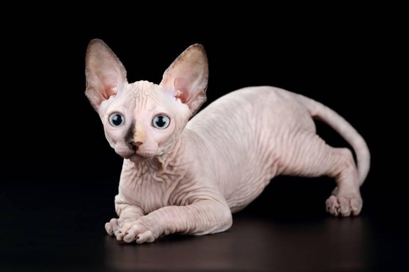 Топ 6 лучших котов для ребенка: няшные мурчики