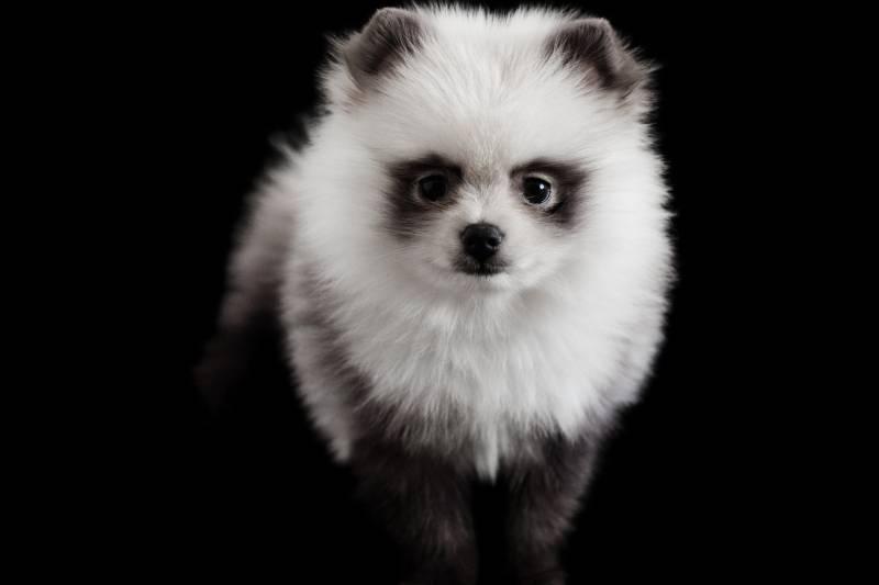 самые красивые породы собак
