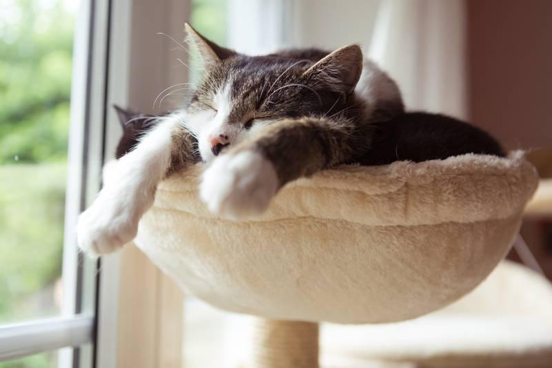 мебель для кошек своими руками