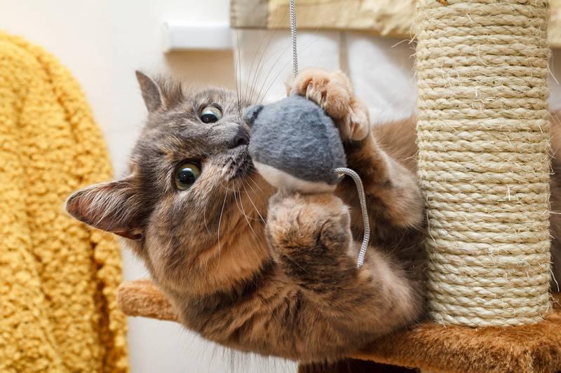 мебель для кошек купить