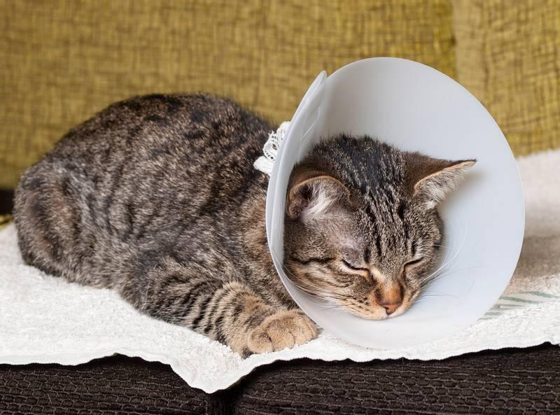 стерилизация кошек цена