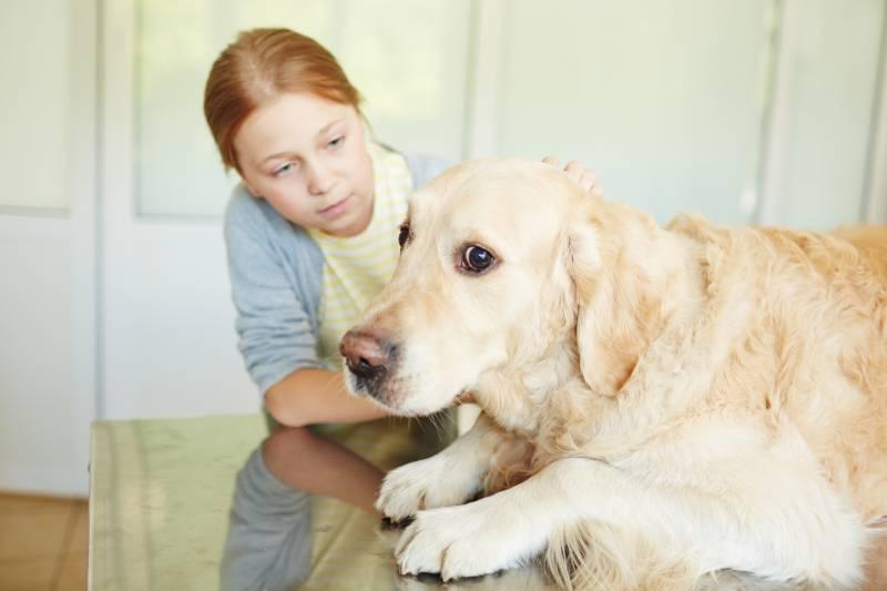 онлайн ветеринар консультация 24 часа