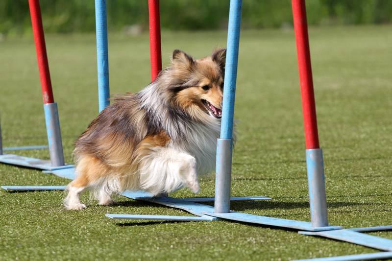 Суставы вашей собаки внутрисуставные инъекции из германии привезли лекарство