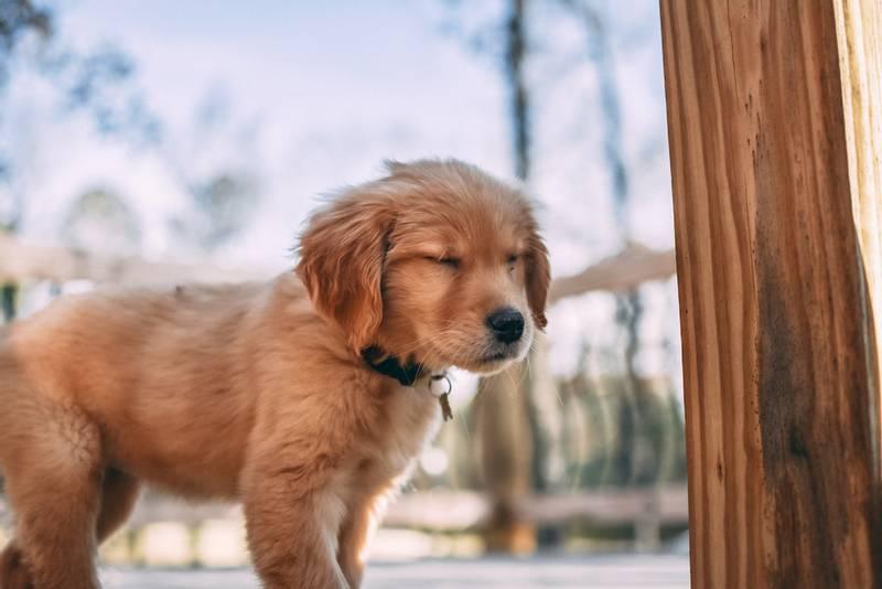 Спасли щенка с улицы. Что дальше? - Питомцы Mail.ru | 534x800