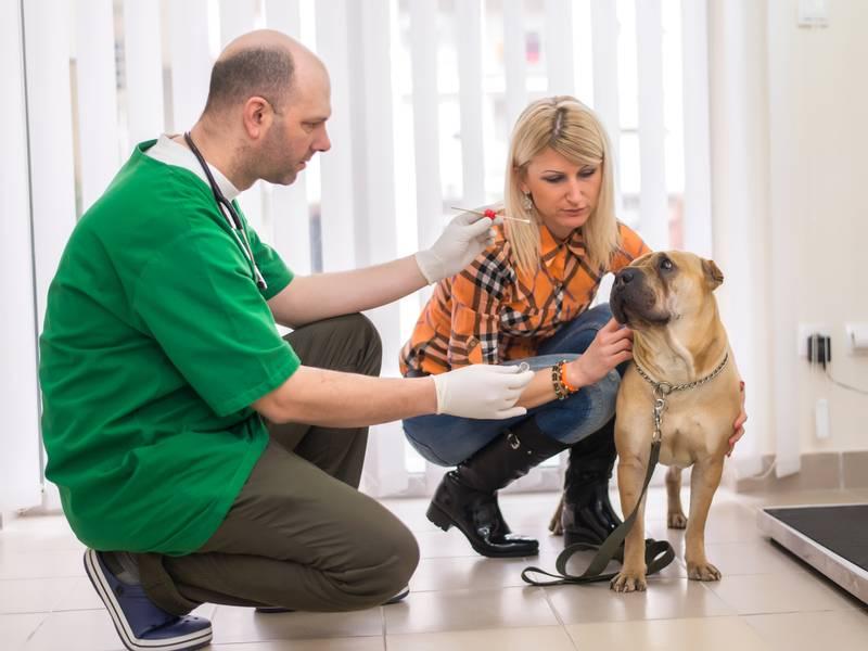 выбрать ветеринара правильно