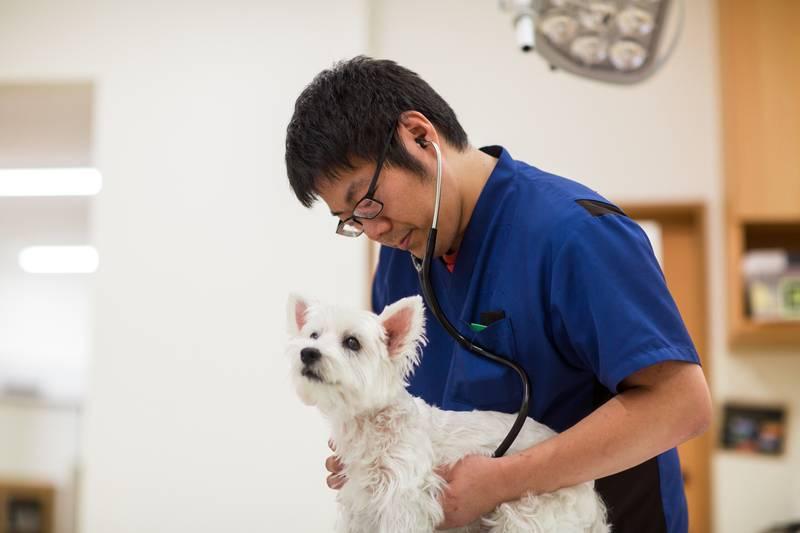 Собака хромает: хирург об одной из возможных причин